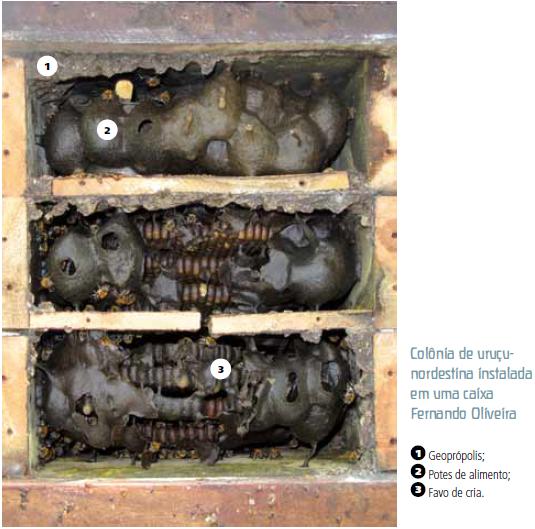 Colônia de uruçu-nordestina instalada em uma caixa INPA