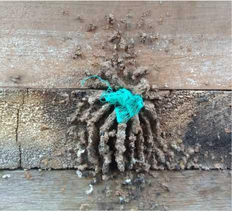 Como fechar caixa de abelhas sem ferrão